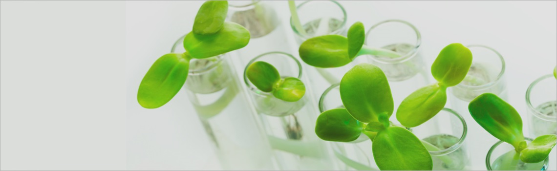 Sabinsa Tissue Culture